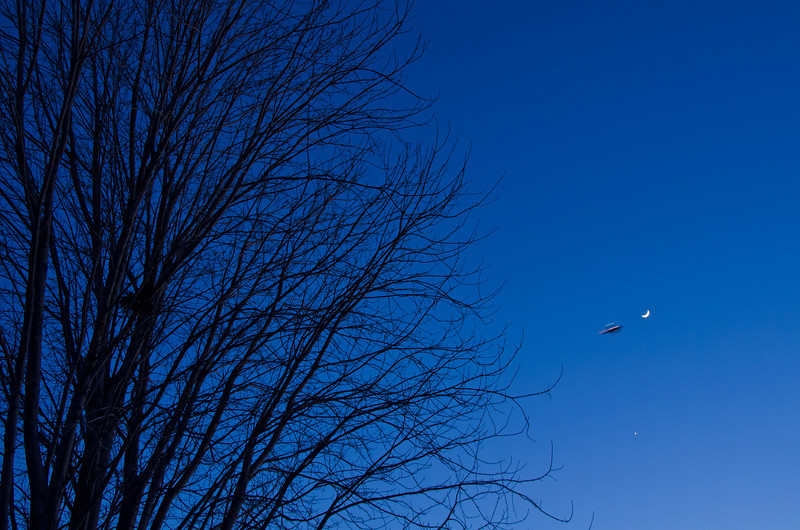 Day 360: Fly Me to the Moon I started to think about the photo for today late. I spent the morning at home and did not feel inspired to make photos around the house. I was occupied with some work until late afternoon; back at square one. I saw the blue sky, the moon, and the tree. While composing the shot, an airplane flew by and happened to be at the direction of the moon.