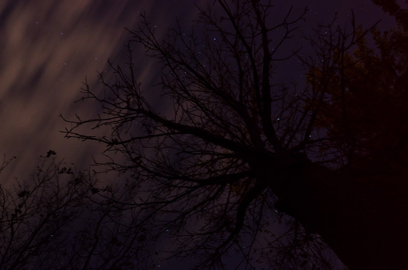Day 264: Leafless Tree Under the Stars Saturday night and I was still working on an assignment for class. I had to really push myself to work on it. A tough class to go through. Low motivation on my part did not  help either.