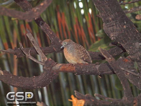 Maui December 2011 307
