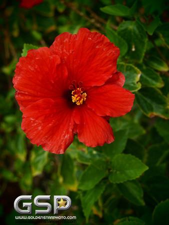 Maui December 2011 154