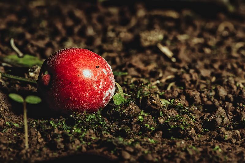 Cherry Red Fruit
