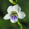 Tiny Weed, Tiny Flower
