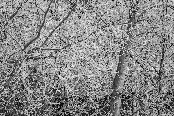Frost in Black and White