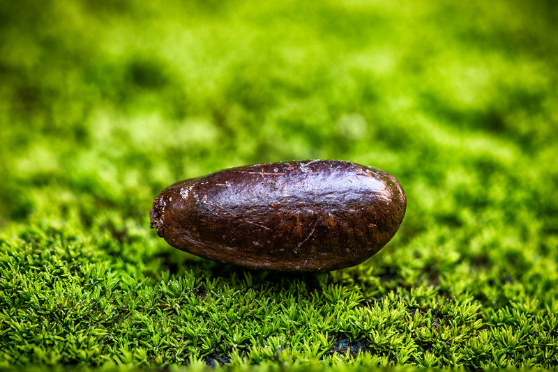 Seed on Bed of Moss