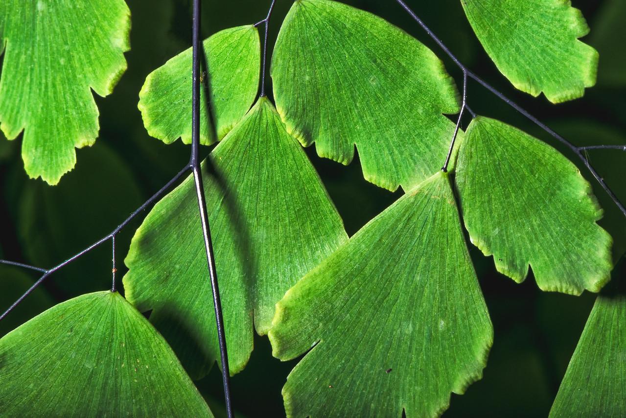 Leaves Mosaic