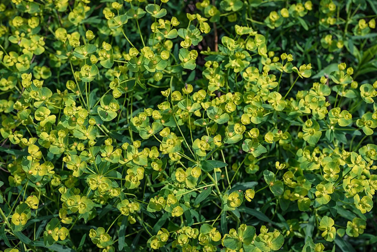 Bush Flowers Along the Path