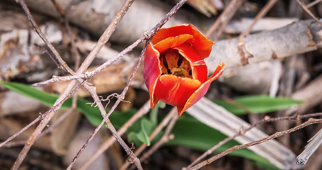 One Tough Flower