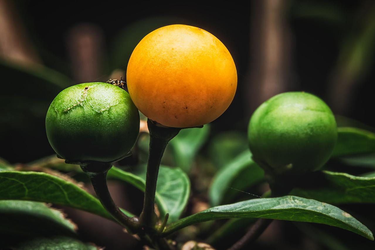 Yellow Fruit
