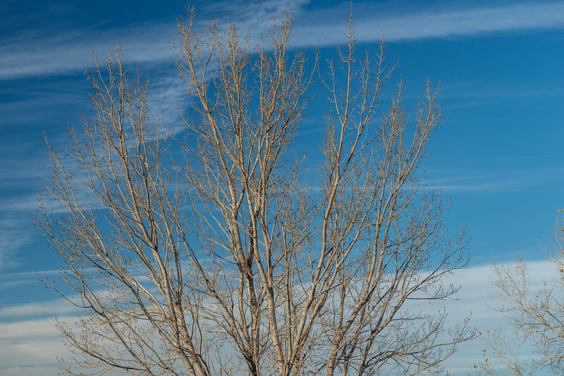 No Foliage, Just Blue Sky
