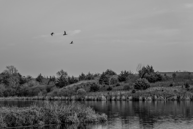 Three Geese Over the Lake