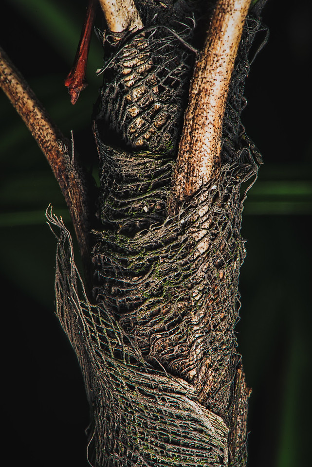 Natural Net Around the Palm Tree