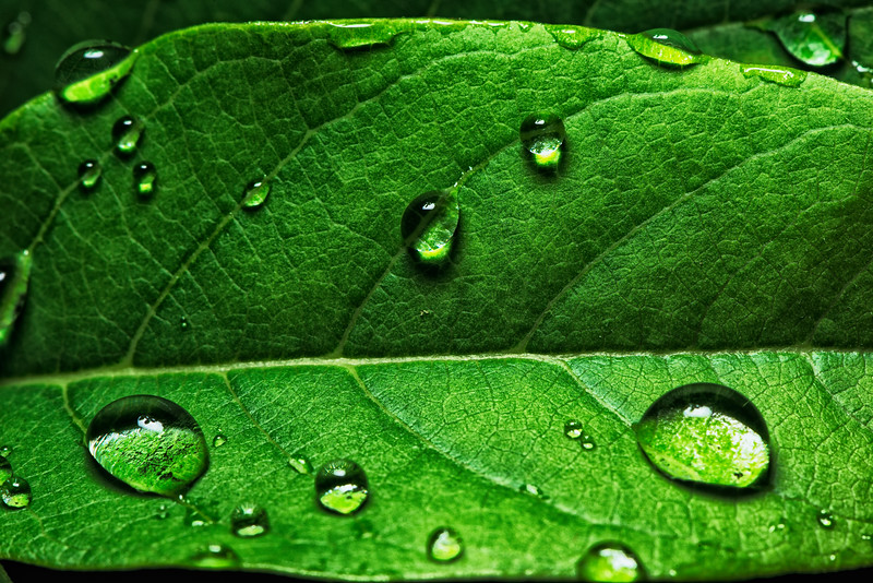 Rain Washed It Clean