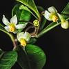 Blooming Three