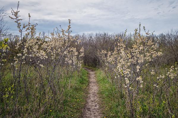 Single Lane Path