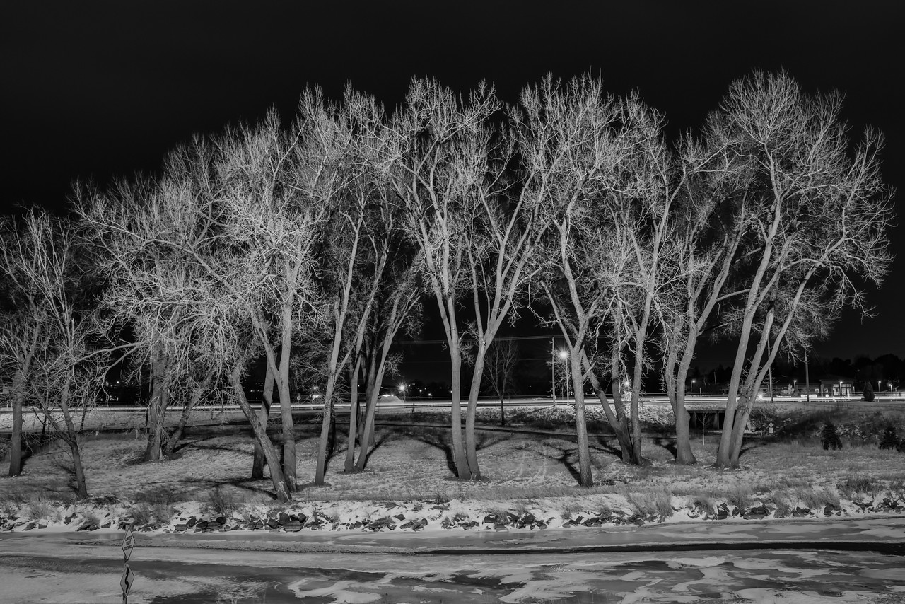 Leafless Trees by the Frozen River