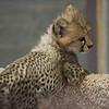 San Diego Wild Animal Park 090801 :