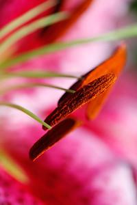 Pollenrama