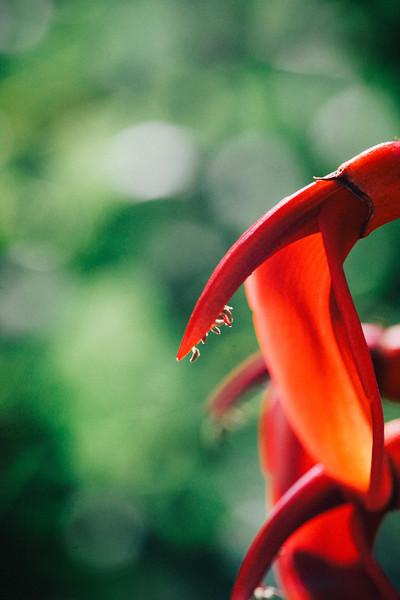 Devils Horn - Wellington Botanical Gardens