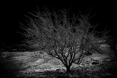 Iachigualasto - Fotos Lunares #6
