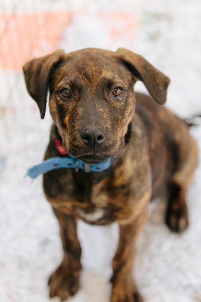 SPCA Street appeal
