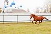 Running red horse