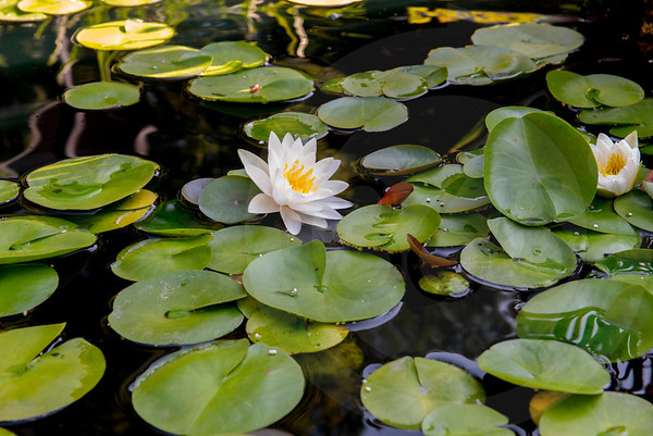 Athens_Botanical Gardens_4054