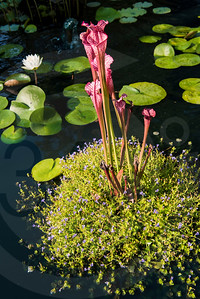 Athens_Botanical Gardens_4046