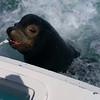 The sea lion in Cabo Mexico