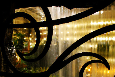 Night time in the Cascades Conservatory.