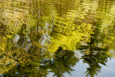 Reflections in Fosters Pond.