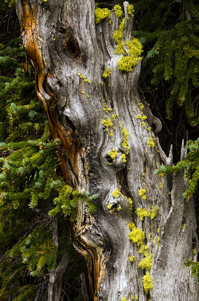 treetexture.jpg