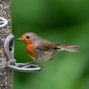 2 -Robin