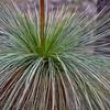 Grass Tree Hairdo