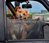 Harmoni-photography-Trigg-dog