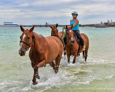 Valentine's Day Kwinana Horse Beach 2021