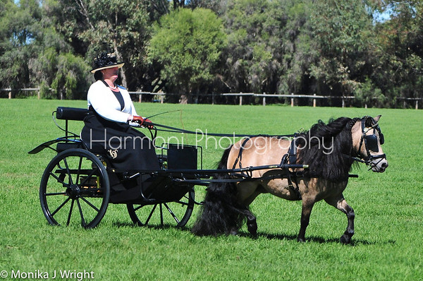 Harmoni Photography Horse & Carriage