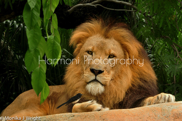 Harmoni Photography Zoo Encounters