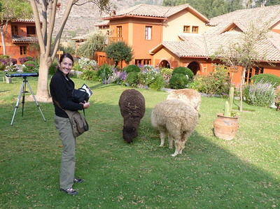 We loved the 3 llamas that kept the grounds mowed