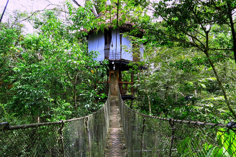Staying in a jungle treehouse in the Peruvian Amazon