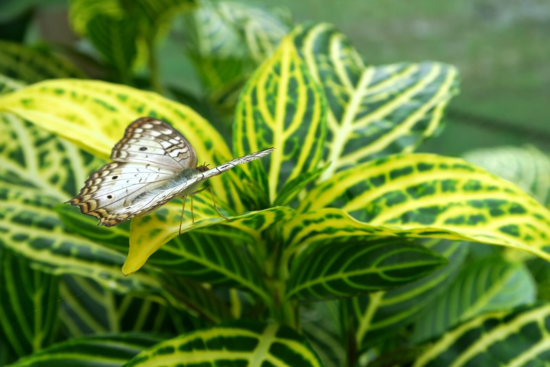 Visiting a butterfly farm