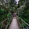 Hiking in the cloud forest at Mandor