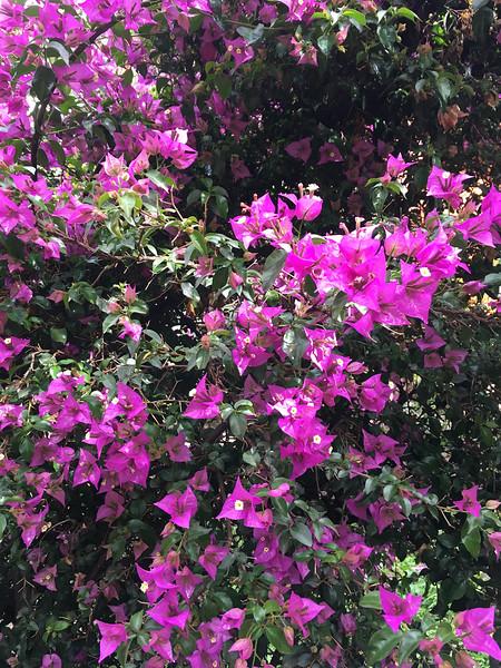 Sue's Pics-the amazing flower gardens at the Hotel Pakiritampu