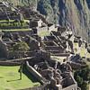 Peru201700277