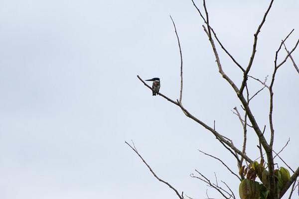 AmazonRiver Bird Watching