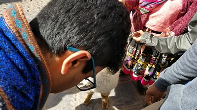 Alpaca wool from Peru's southern region of Puno is the most finely threaded in the world, and Guinness Records makes it official. the Incas placed a higher value on the fiber than silver or gold.