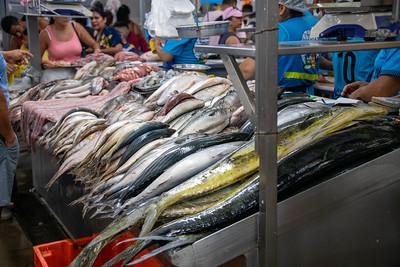 Fresh Fish For Sale.  Lima, Peru