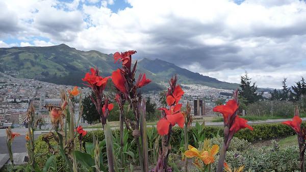 Flowery view of Rucu Pichincha (mountain), from Ichimbia park.