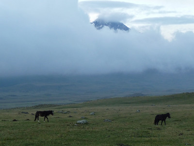 Wild horses frolic in the valley as Cotopaxi rests majestically behind a robe of clouds.