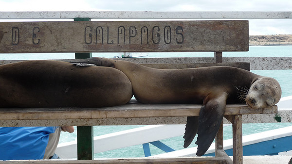 Our first site in the Galapagos!