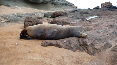 Sea lion chilling out.